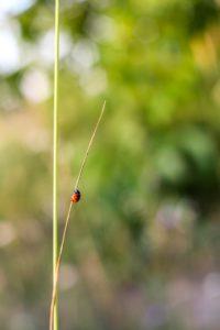 秋のてんとう虫